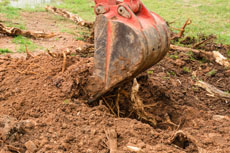 tree stump removals perth